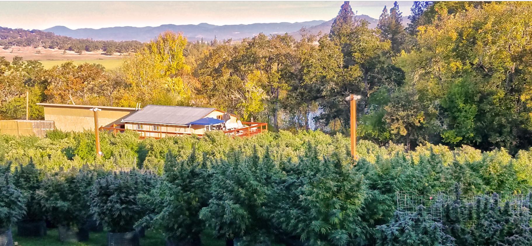Oregon Cannabis Farms